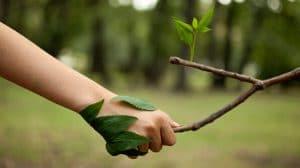 Les entreprises et la Responsabilité Civile des Atteintes à l'Environnement (RCAE)